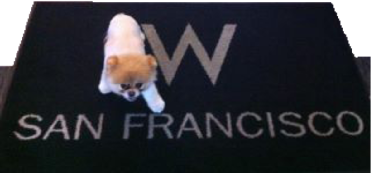 Posing for a sweepstakes on Facebook. Winner gets a weekend with his or her dog at the San Francisco W Hotel.