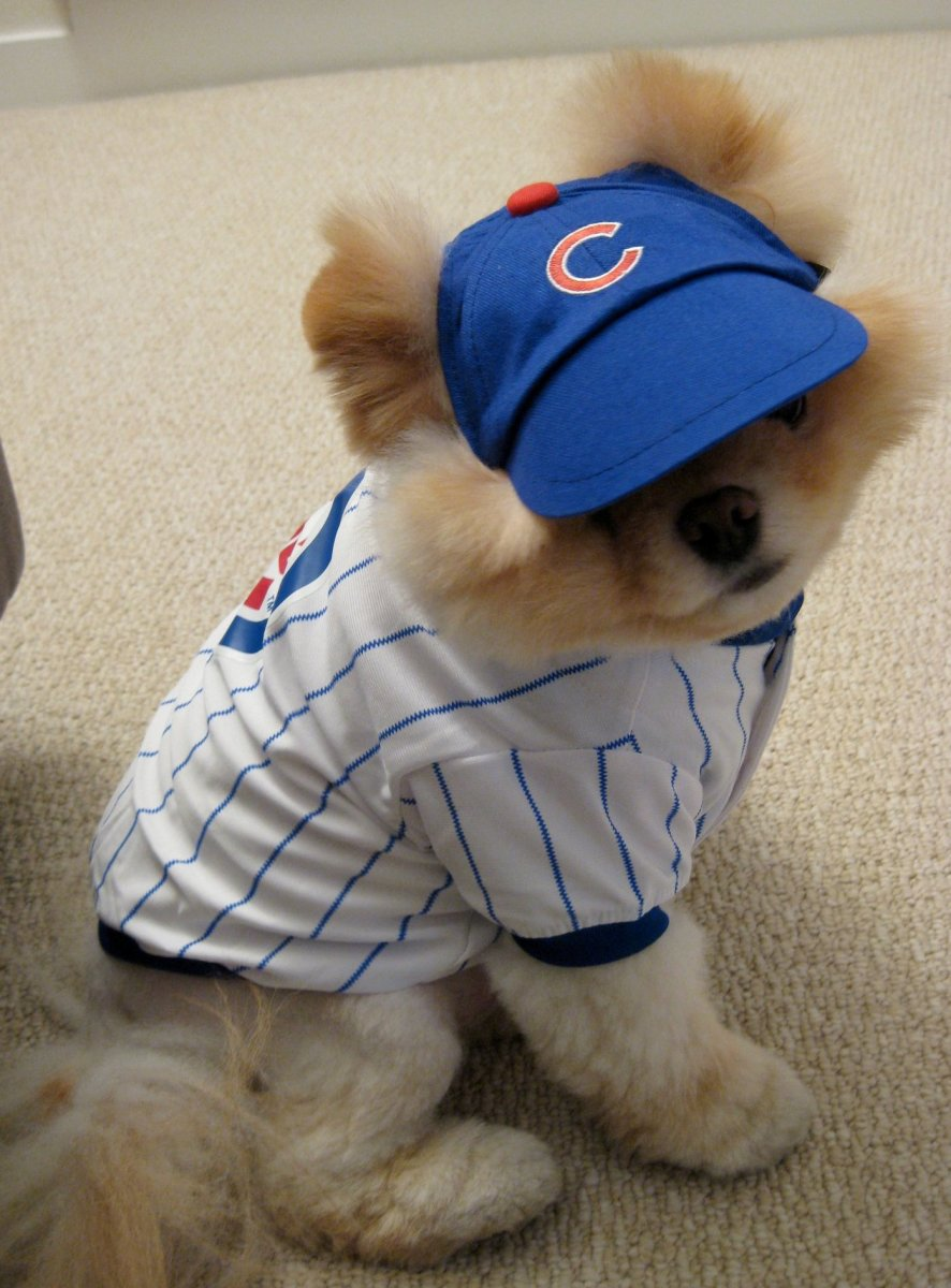 Boo the Cutest Dog is a sports fan.
