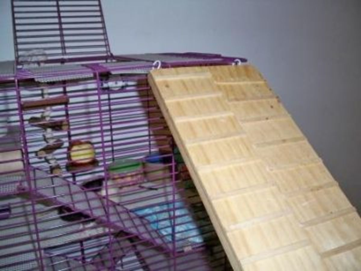 Homemade toy for pet rats - Bridge