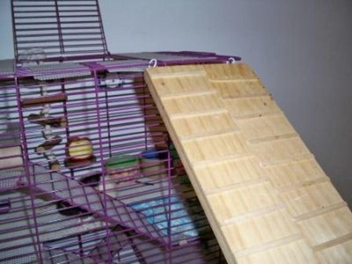 Homemade toy for pet rats - Bridge