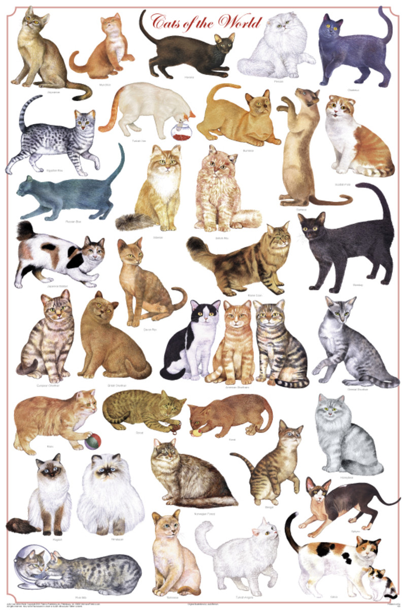 Cats now have a fascination to people and are a good natural pest control. They come in many types and appeal to the artistic expression. Cat behavior varies very little from breed to breed.