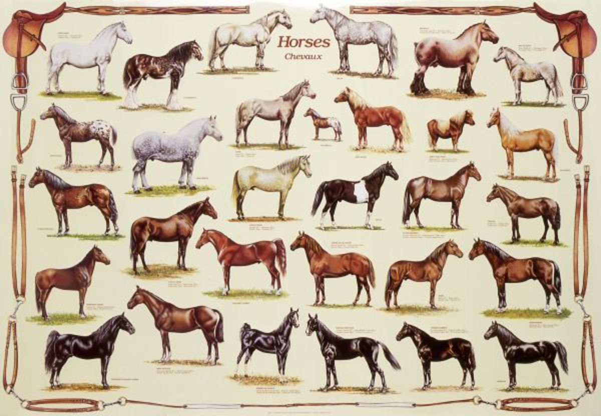 Like dogs, horses have been around people for a long time. Many different breeds for different purposes have been developed.