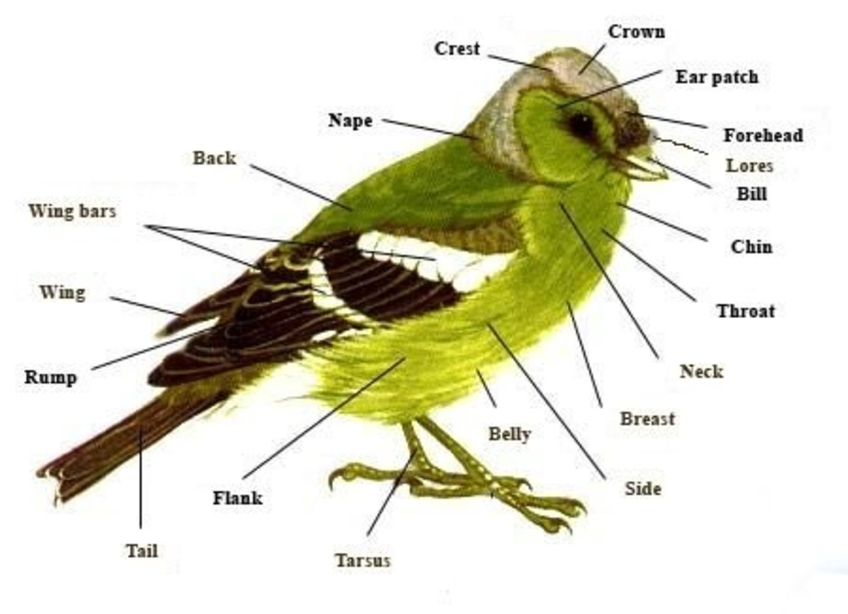 Bird Body Parts : The unique characteristics of birds hubpages