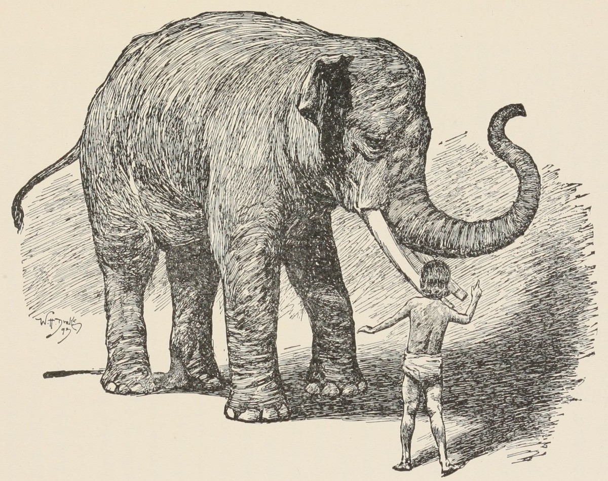 Toomai of the Elephants