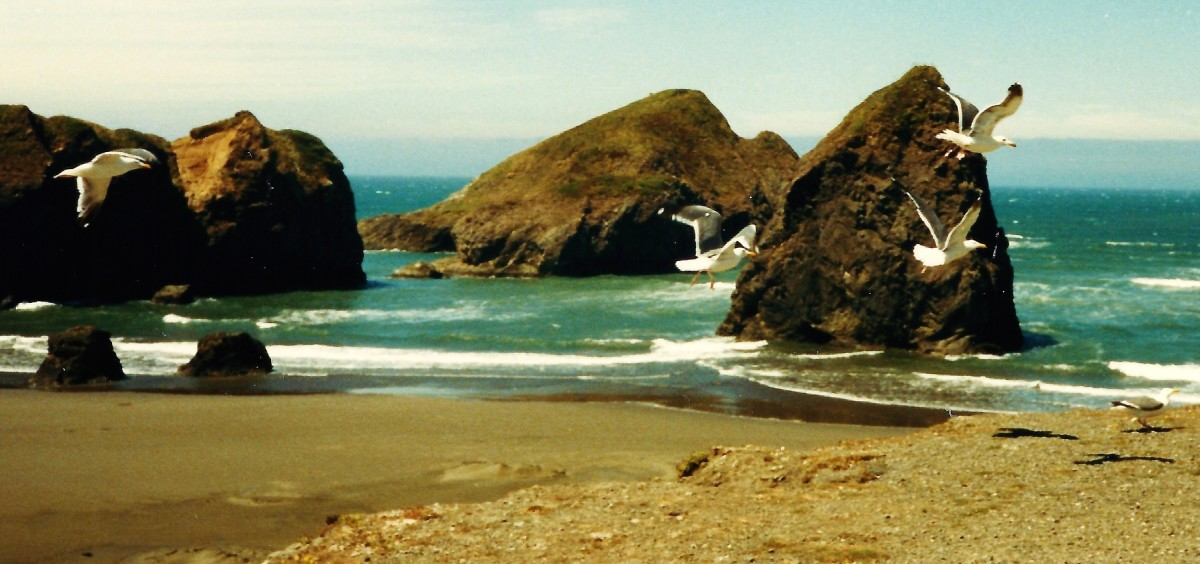 Oregon Coastline Vacation ~ Southern Oregon Coast heading North ~ Pictures, Beaches and Attractions
