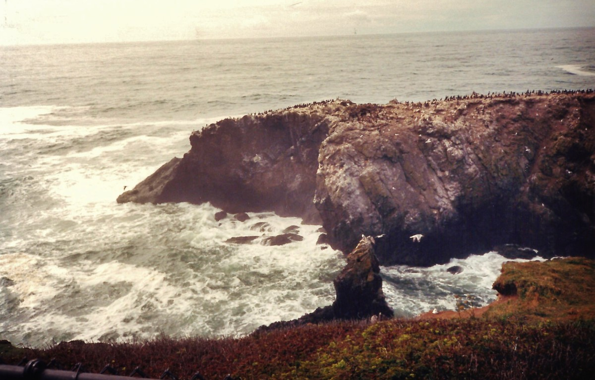 See all the birds roosting on this rock outcropping near the Yaquina Head Light-House?