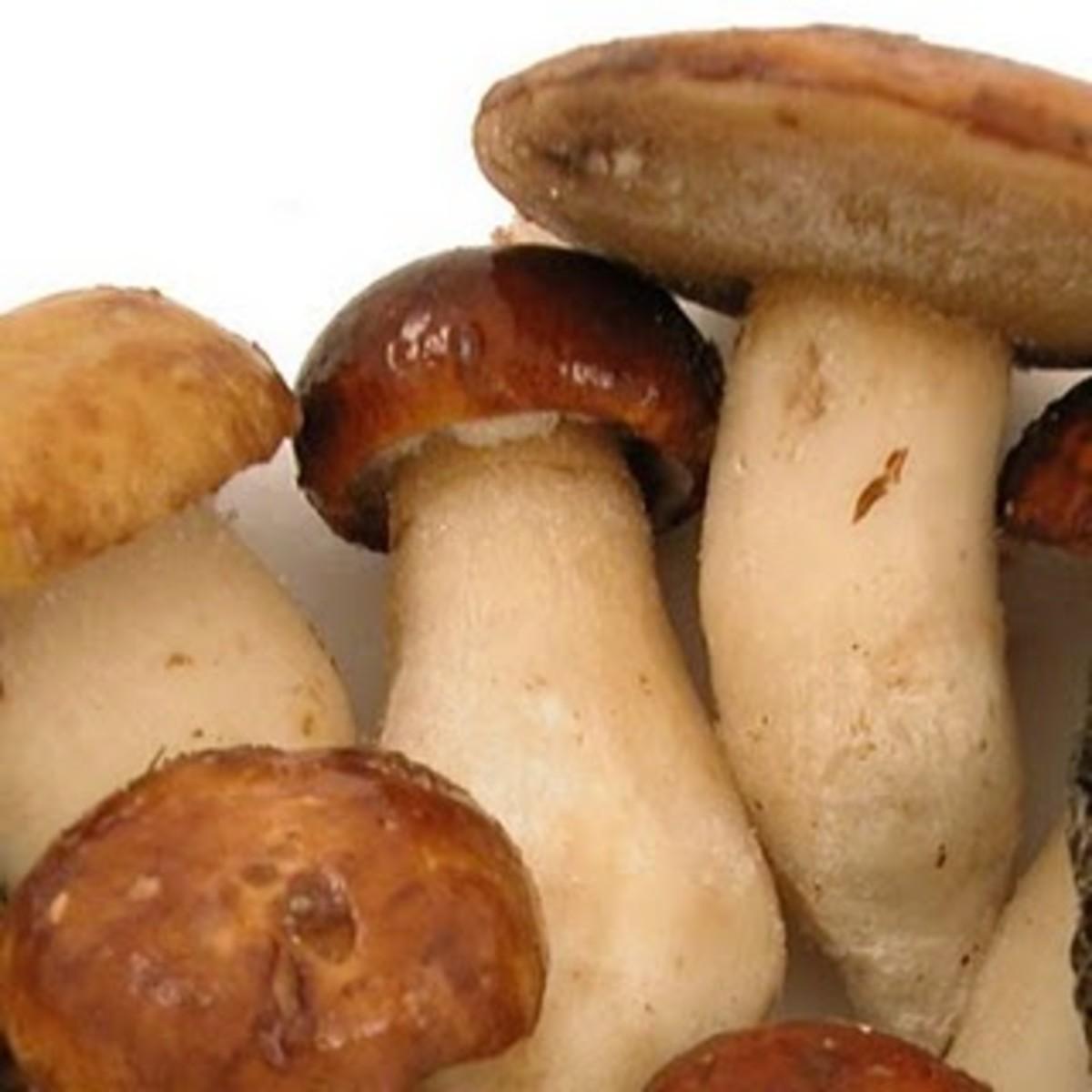 Porcini / penny bun mushrooms