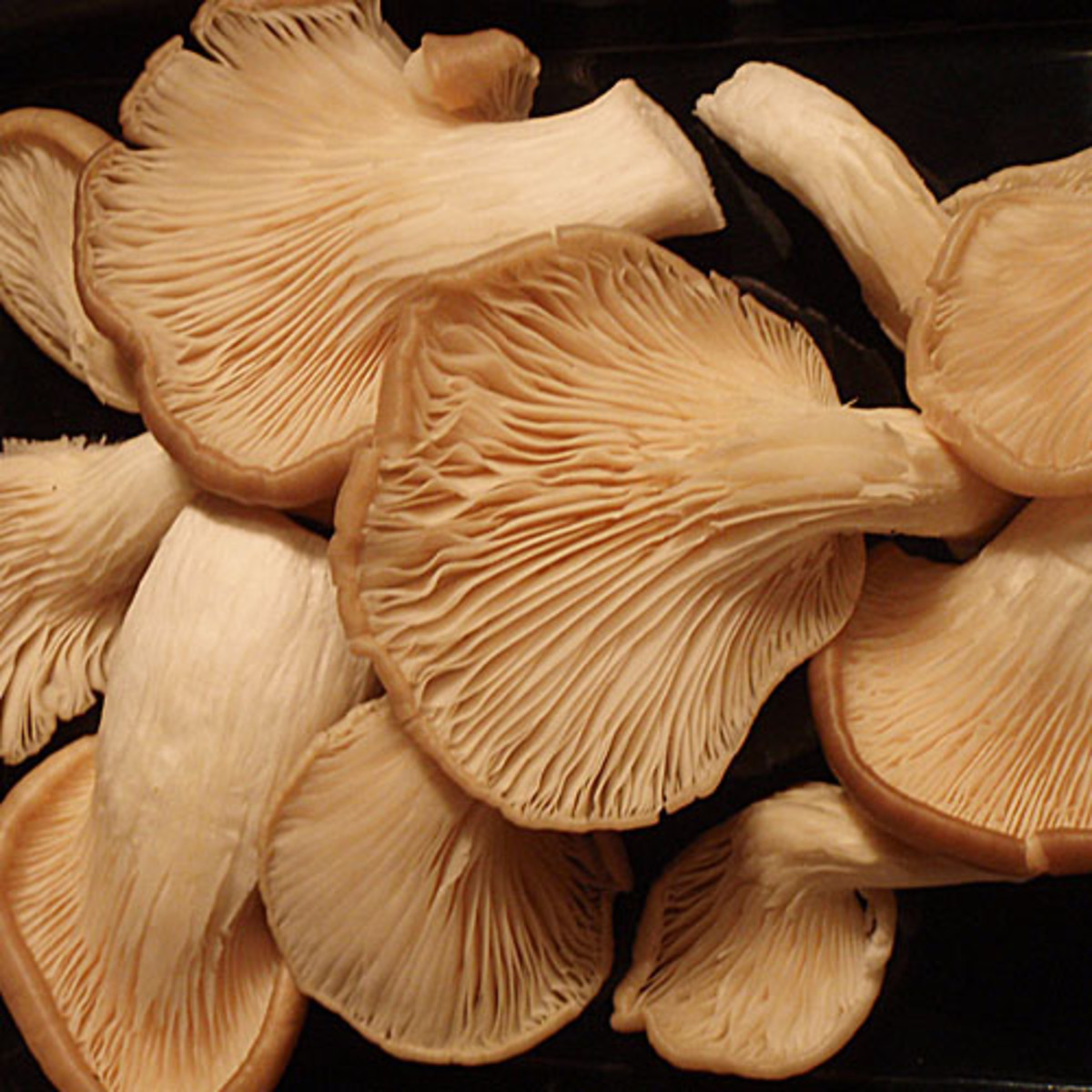 What Are the Different Types of Edible Mushrooms and How Do You Use Them?