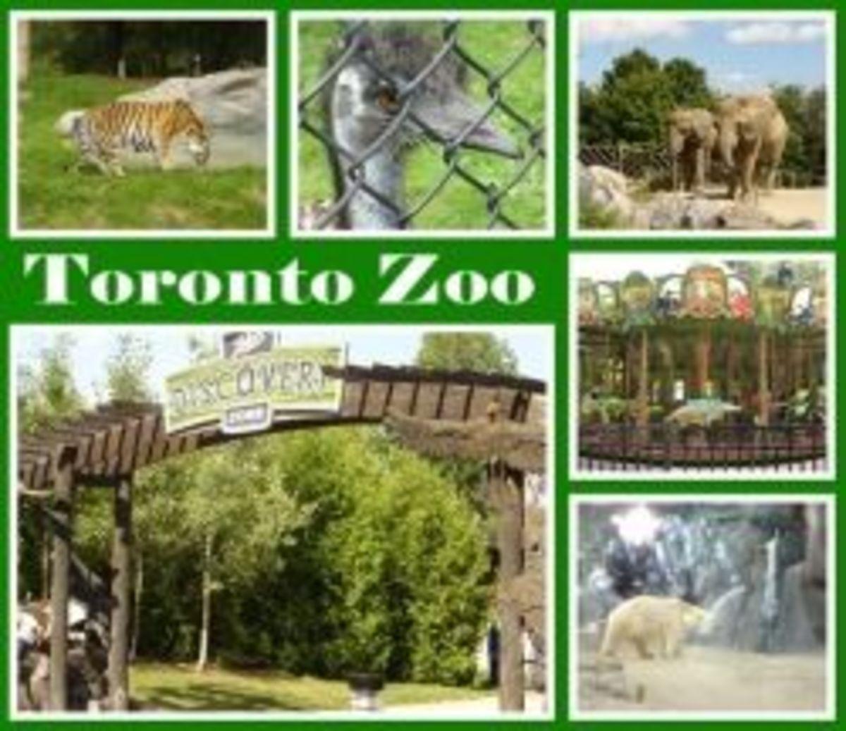 Toronto Zoo Canada