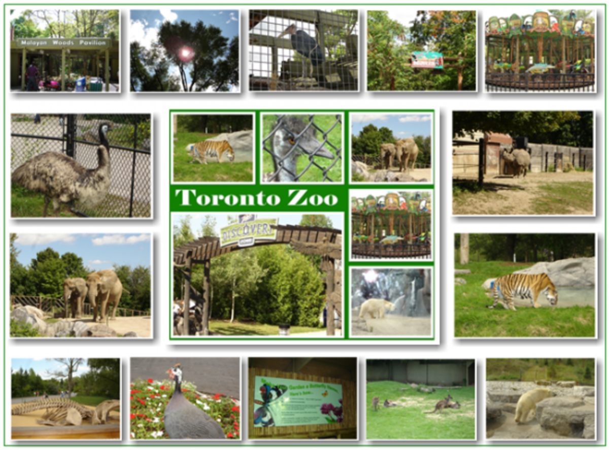 Toronto Zoo Trip Pictures