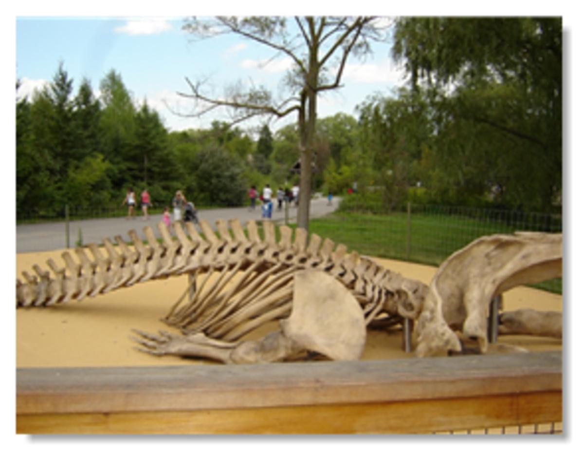 Canadian Domain Toronto Zoo