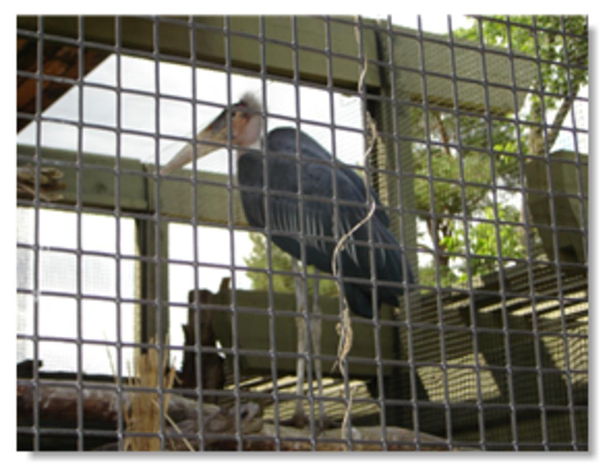 African Pavilion Toronto Zoo