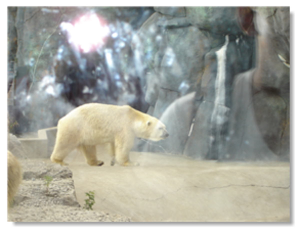 Tundra Trek Toronto Zoo
