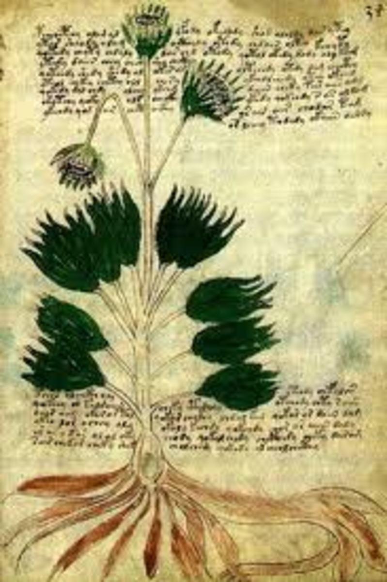 The Voynich Manuscript - Strange Plants