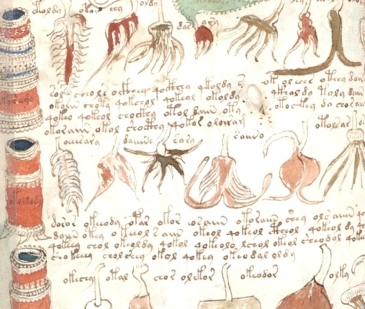 The Voynich Manuscript - Magical or Medicinal recipes?