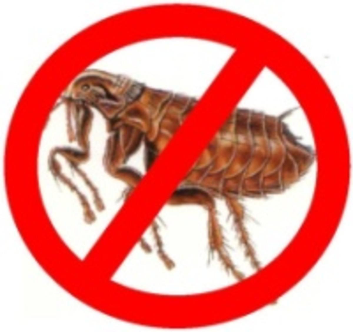 No Fleas! Please