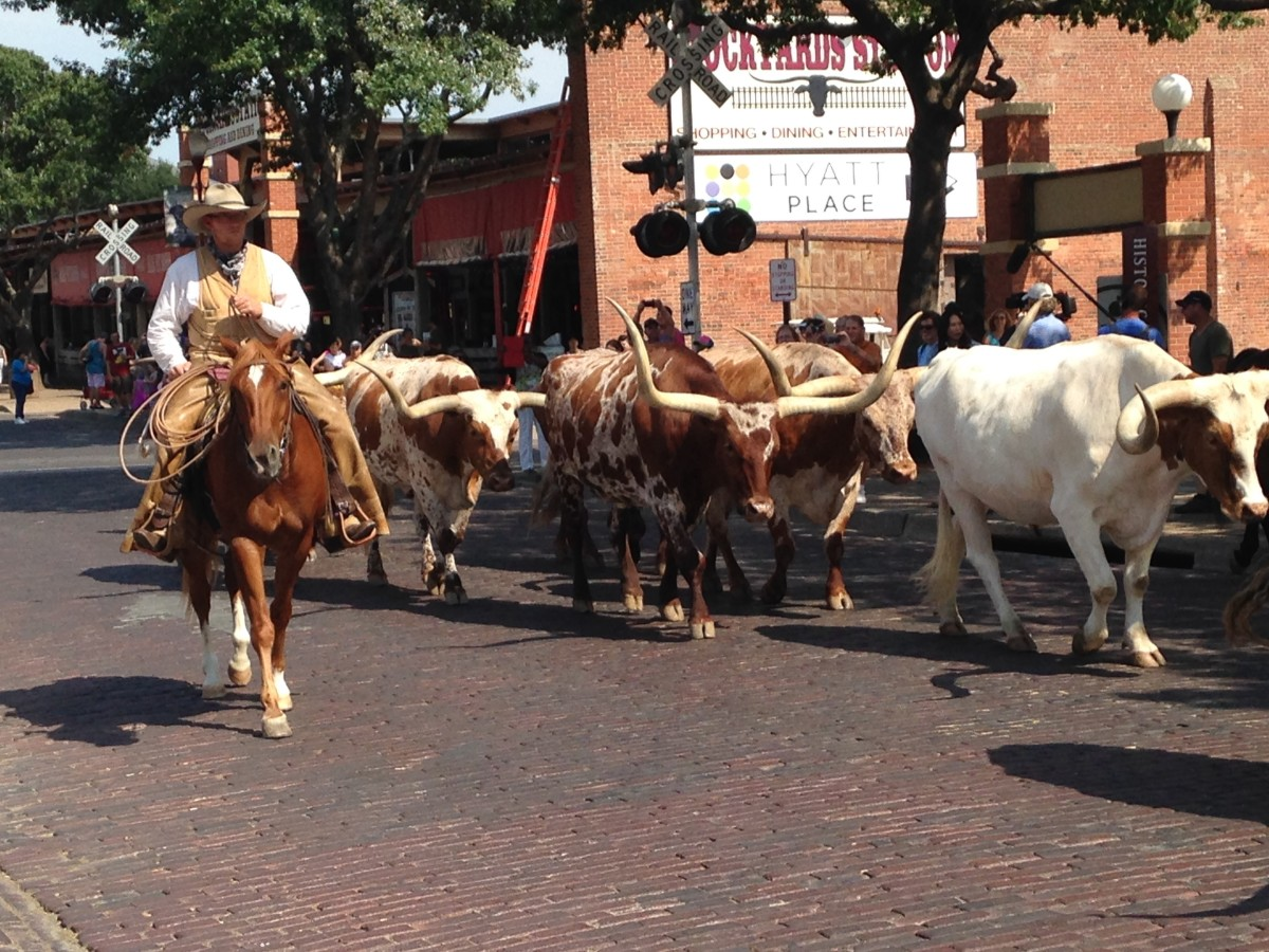 Ft. Worth Stockyards round up