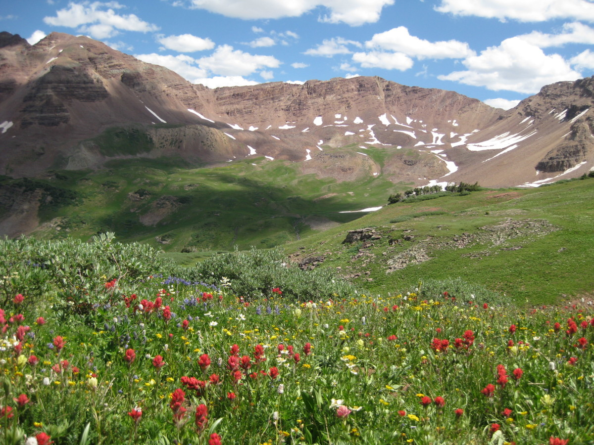 Beautiful wildlflowers adorn Fravert Basin.