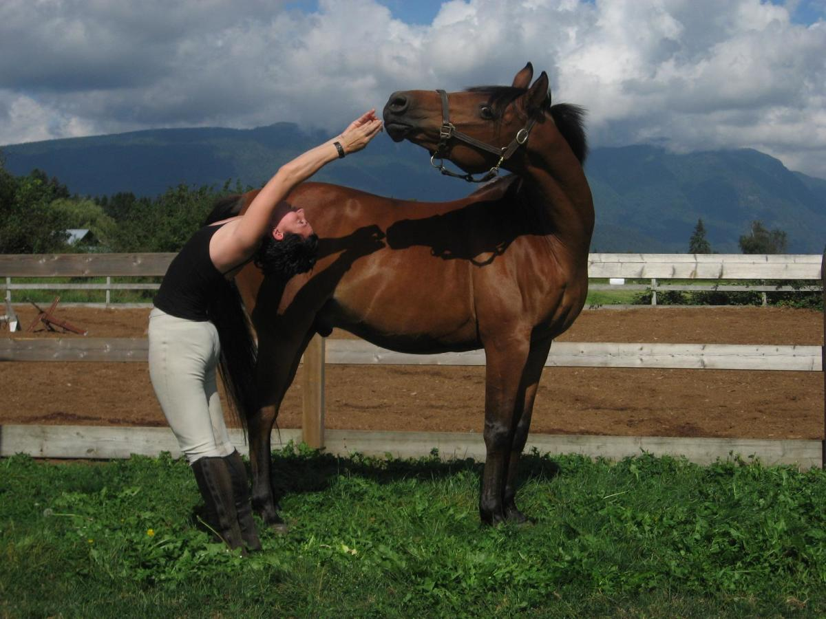 The more advanced Neck Side Stretch sees the person do a Standing Back Bend while the horse looks round and improves its flexibility