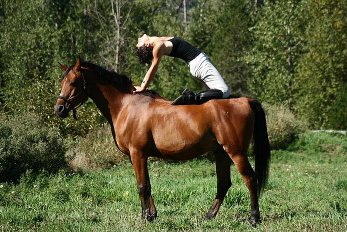 Yoga with horses pioneer Linda Guanti performs a strecth on the back of her horse Lewis
