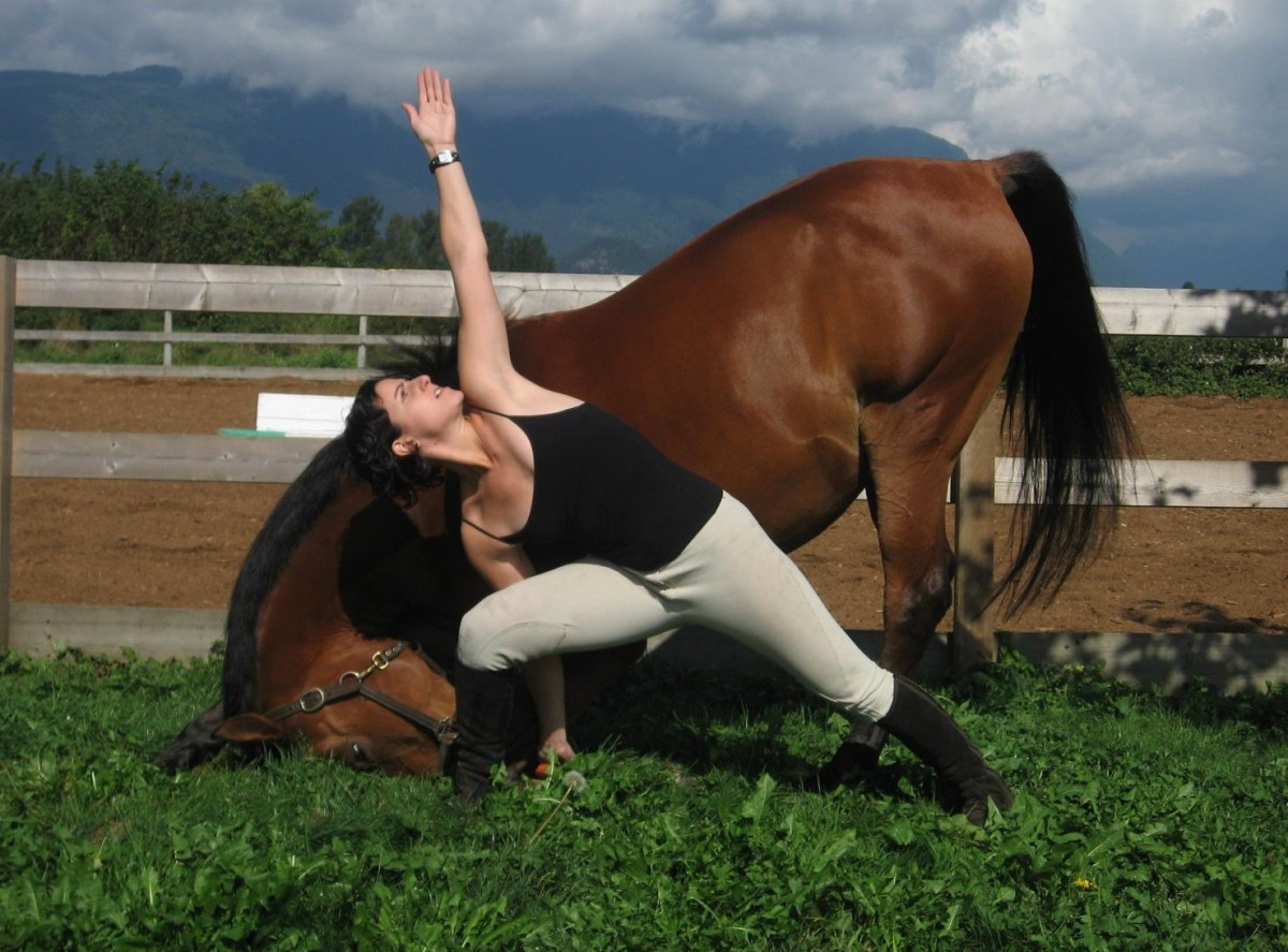 The Bow is more advanced and sees the horse push its head to the ground to stretch its back. It also learns to remain calm in a vulnerable position