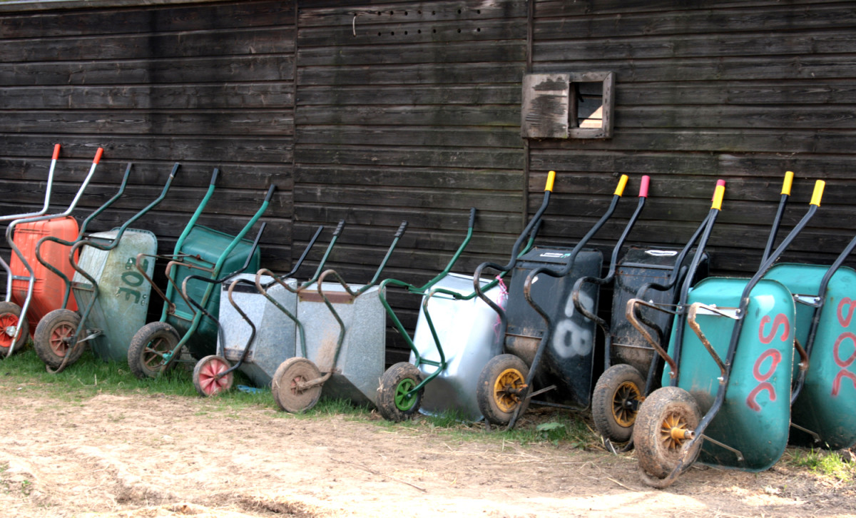 A colorful row of wheelbarrows still in service, perhaps not far from being re-purposed into decorative planters.