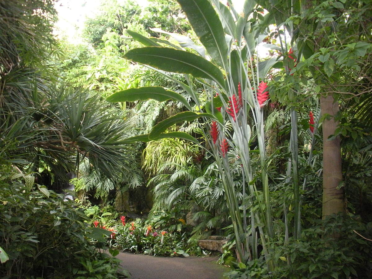 Tropical Trees, Shrubs, and Plants - A Photo Gallery