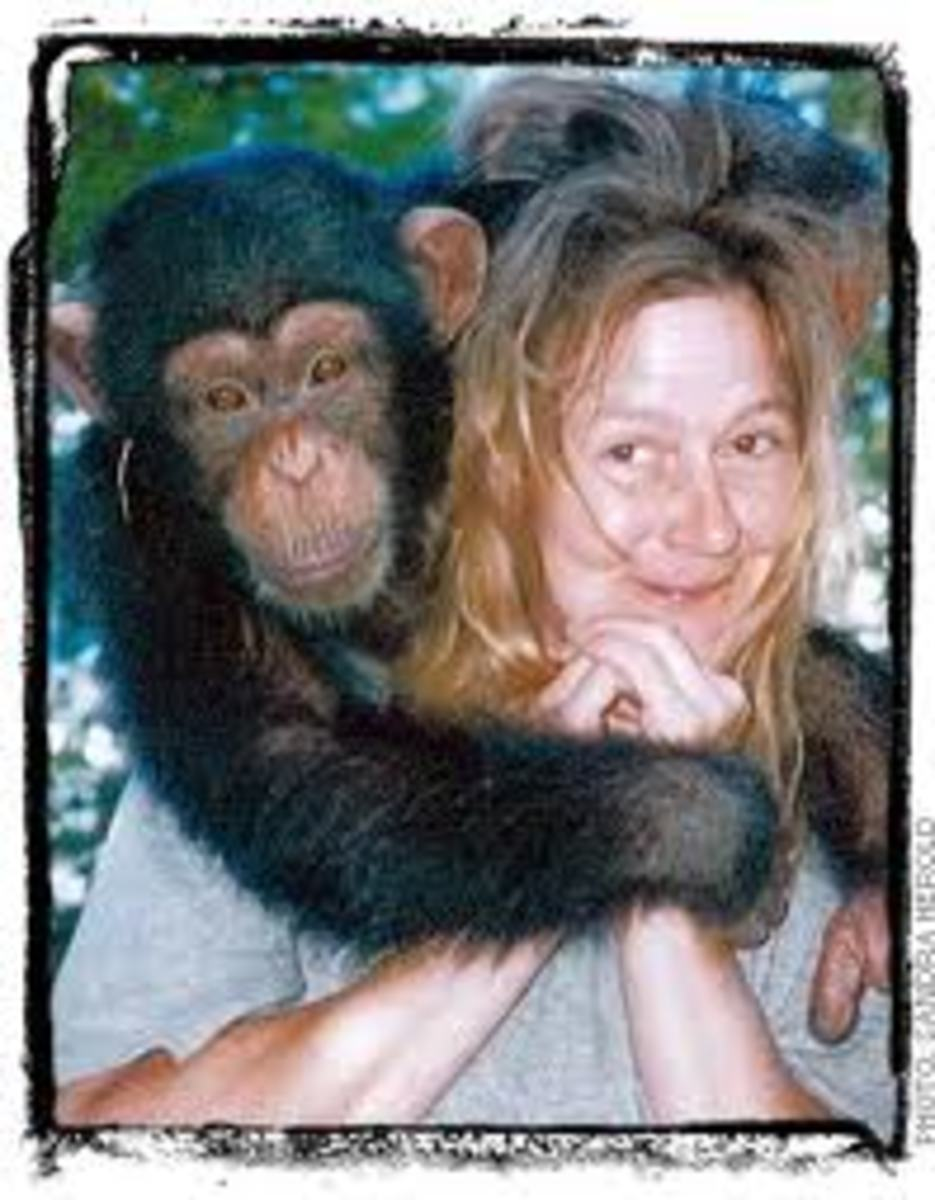 Travis the Chimp and his victim, Charla Nash