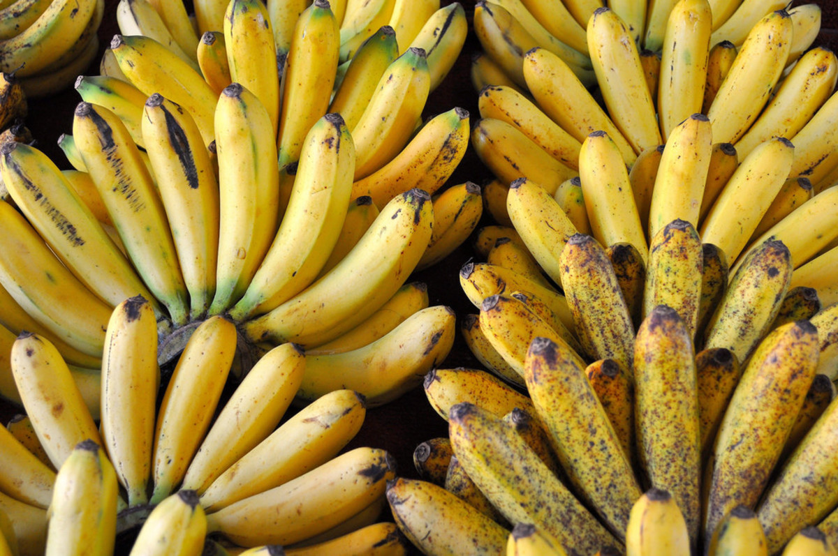 Lakatan/Lacatan bananas from Mindanao Philippines.
