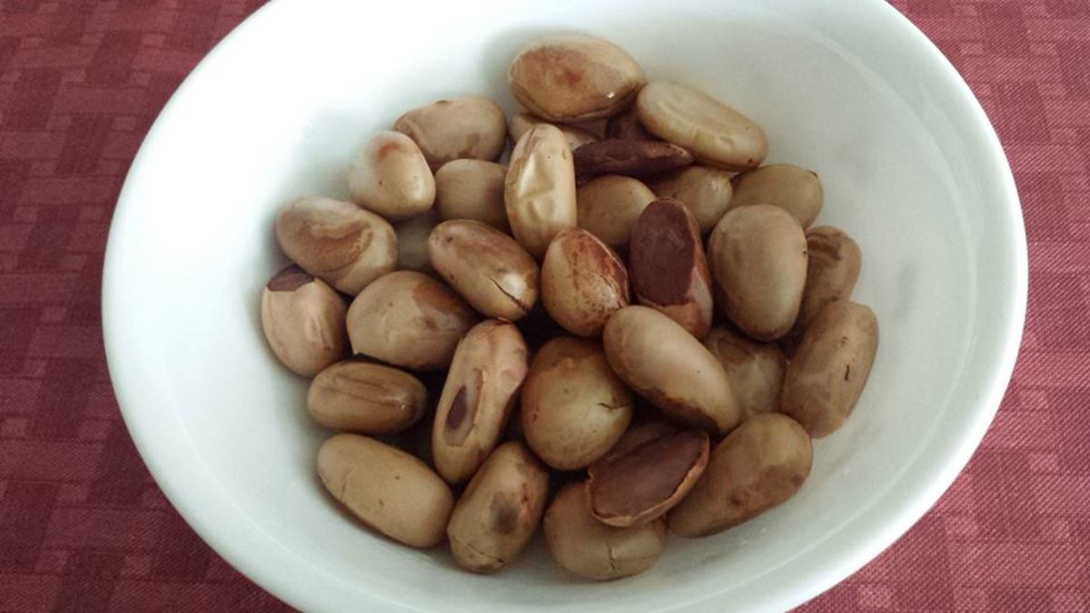 Jackfruit seeds are also boiled and eaten. Tastes like cashew.