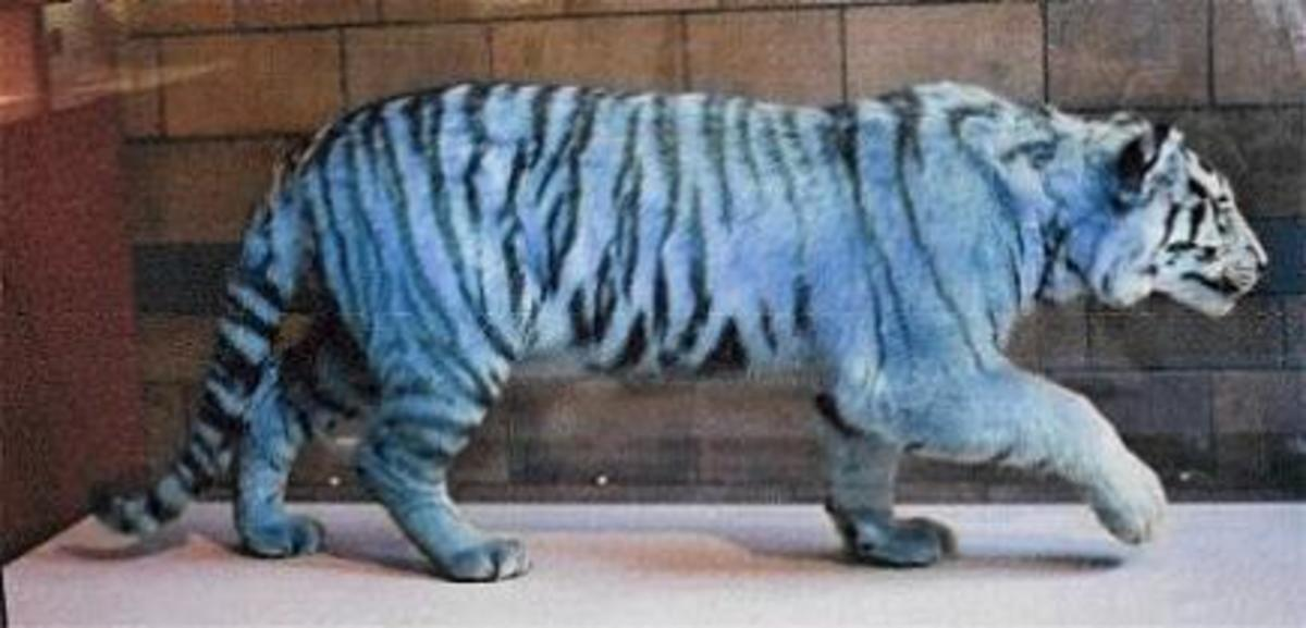 artist rendition of blue (maltese) tiger