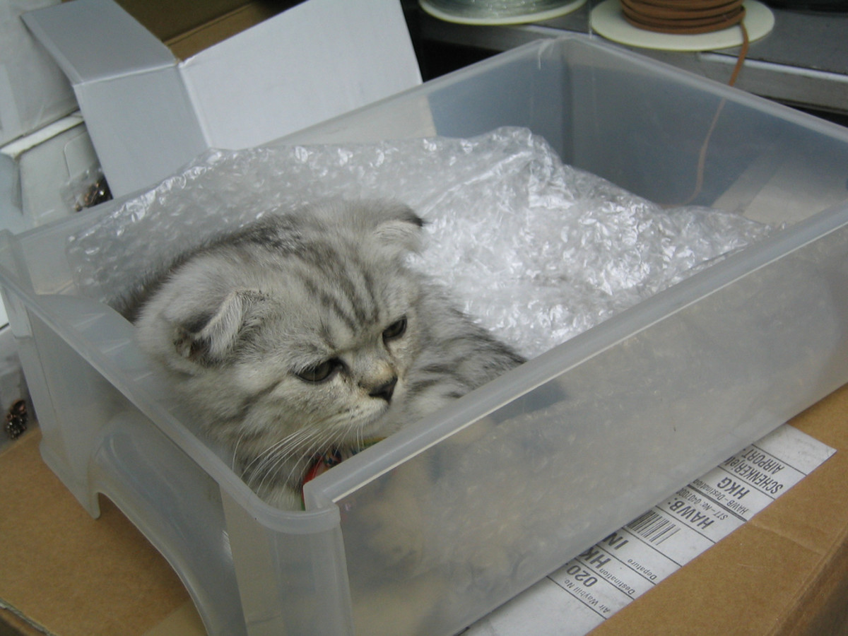 Cute little box.