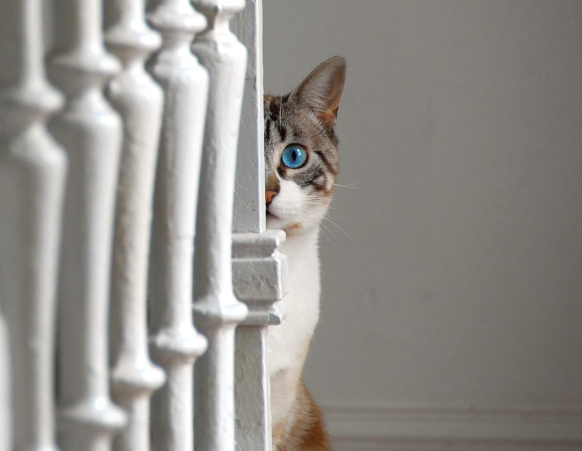 Staring stalker =^_^=