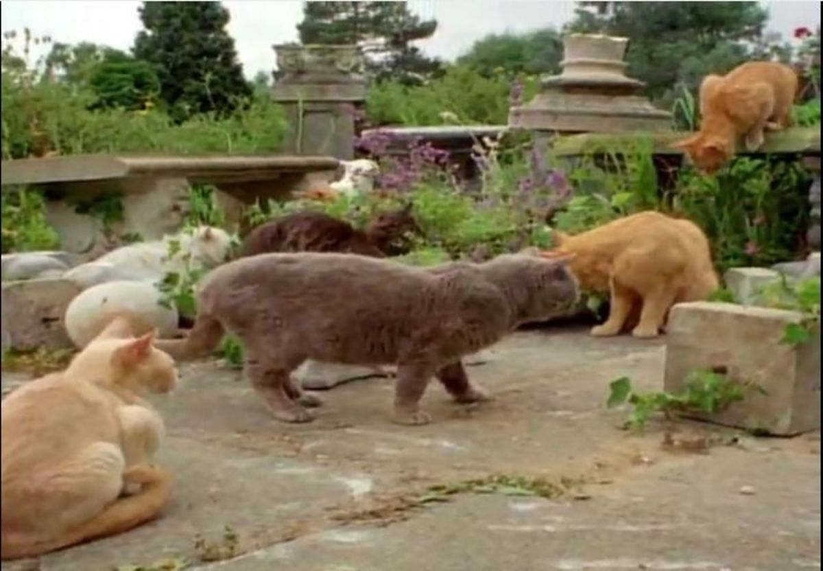 cats attracted to catnip