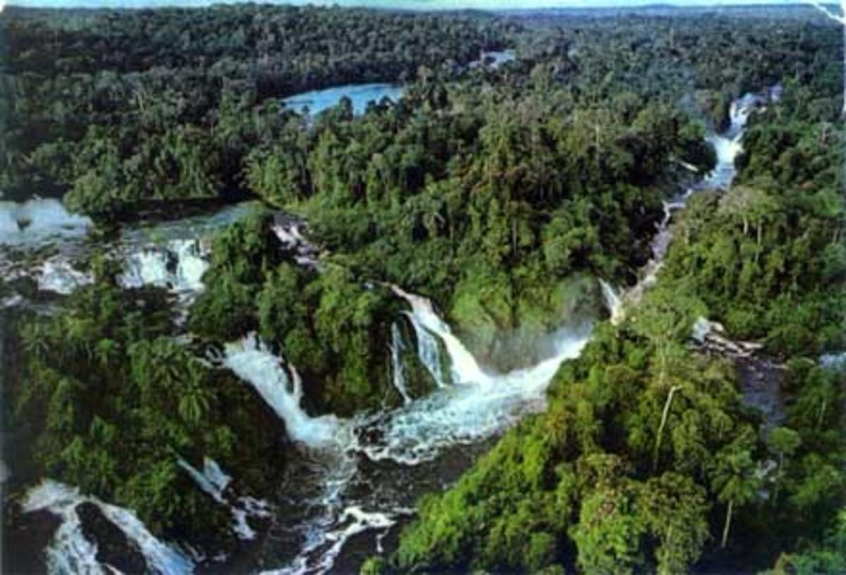 medicinal-plants-of-the-amazon-rainforest