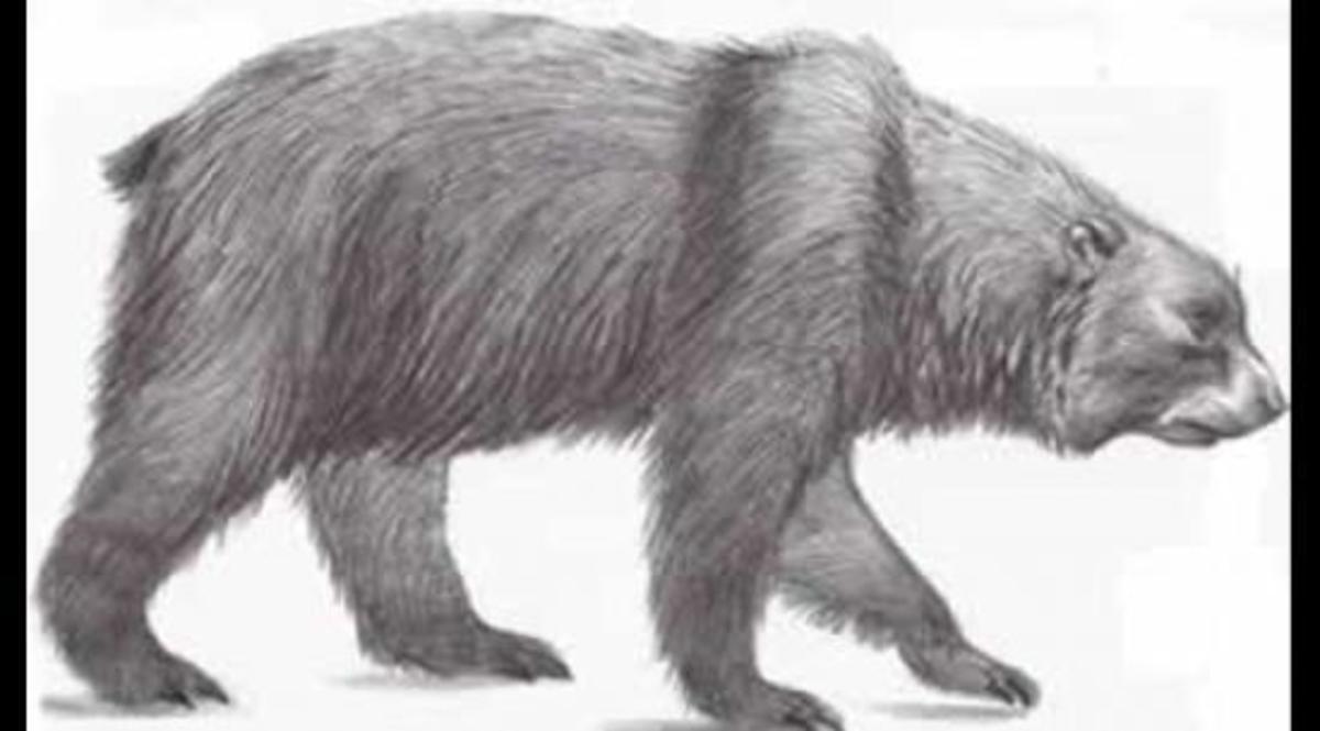 the-short-faced-bear