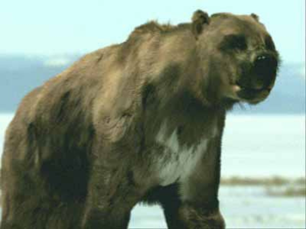 The Short Faced Bear