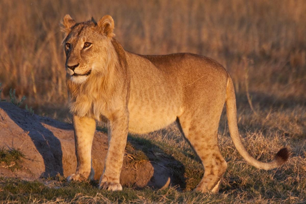 http://shivverma.wordpress.com/workshops/africa-photo-safari-namibia-botswana/