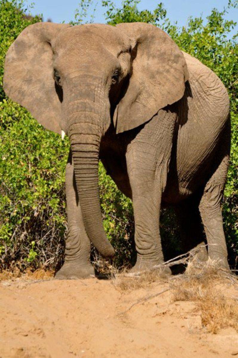 The Bushveld © Mark Bielawny