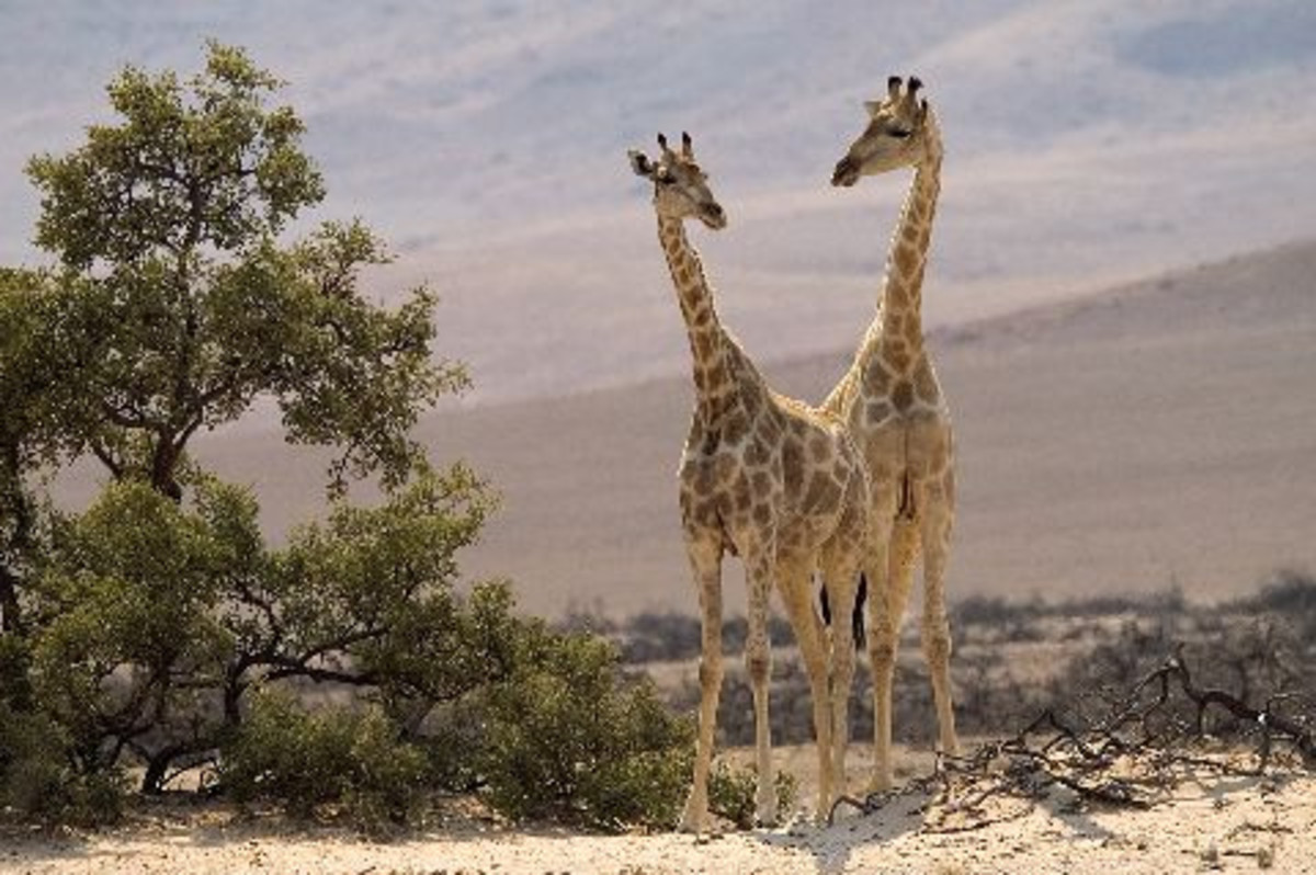 http://www.guideforafrica.com/namibia/skeleton-coast-tours.html