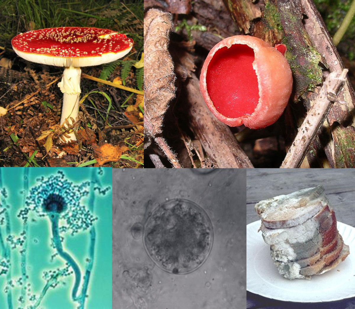 The Amazing World Of Mushrooms And Other Fungi