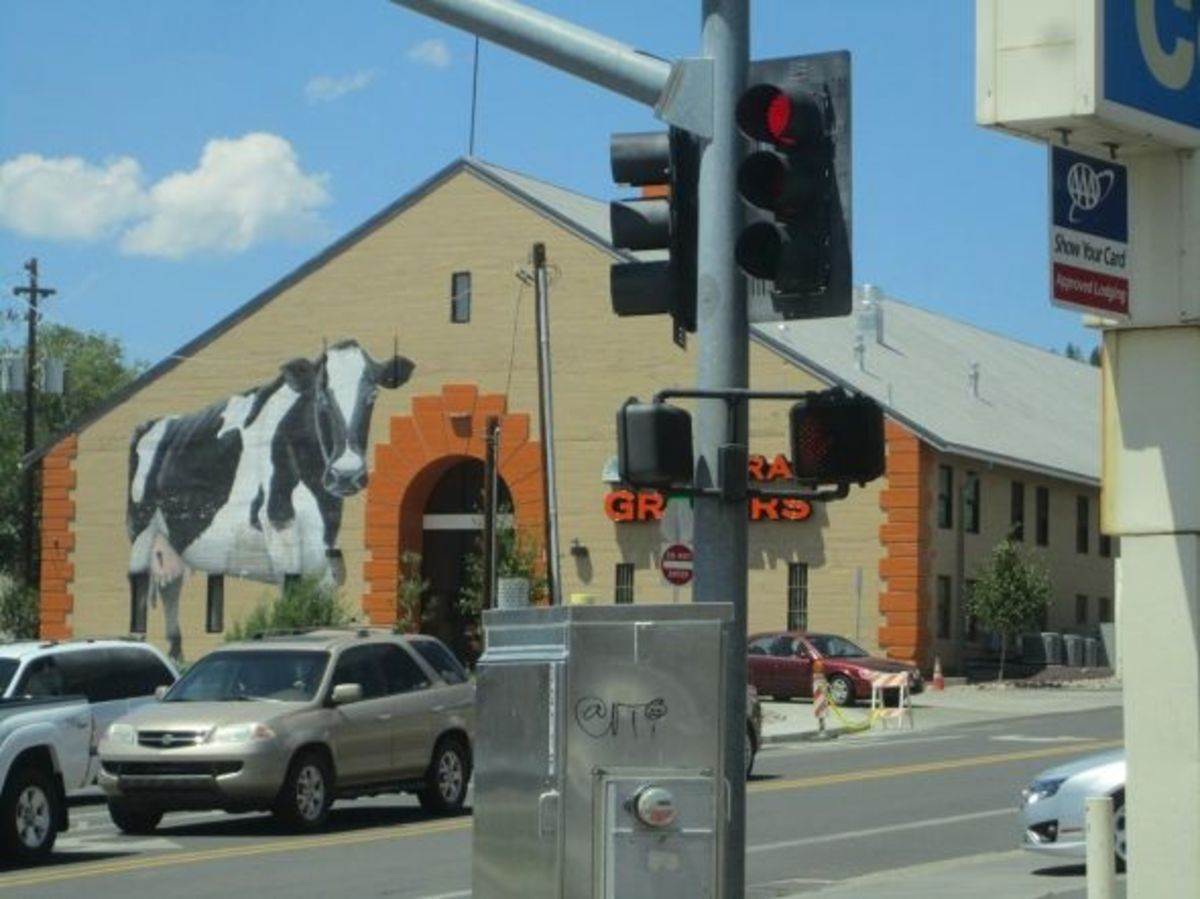 Natural Grocers cow mural, Flagstaff