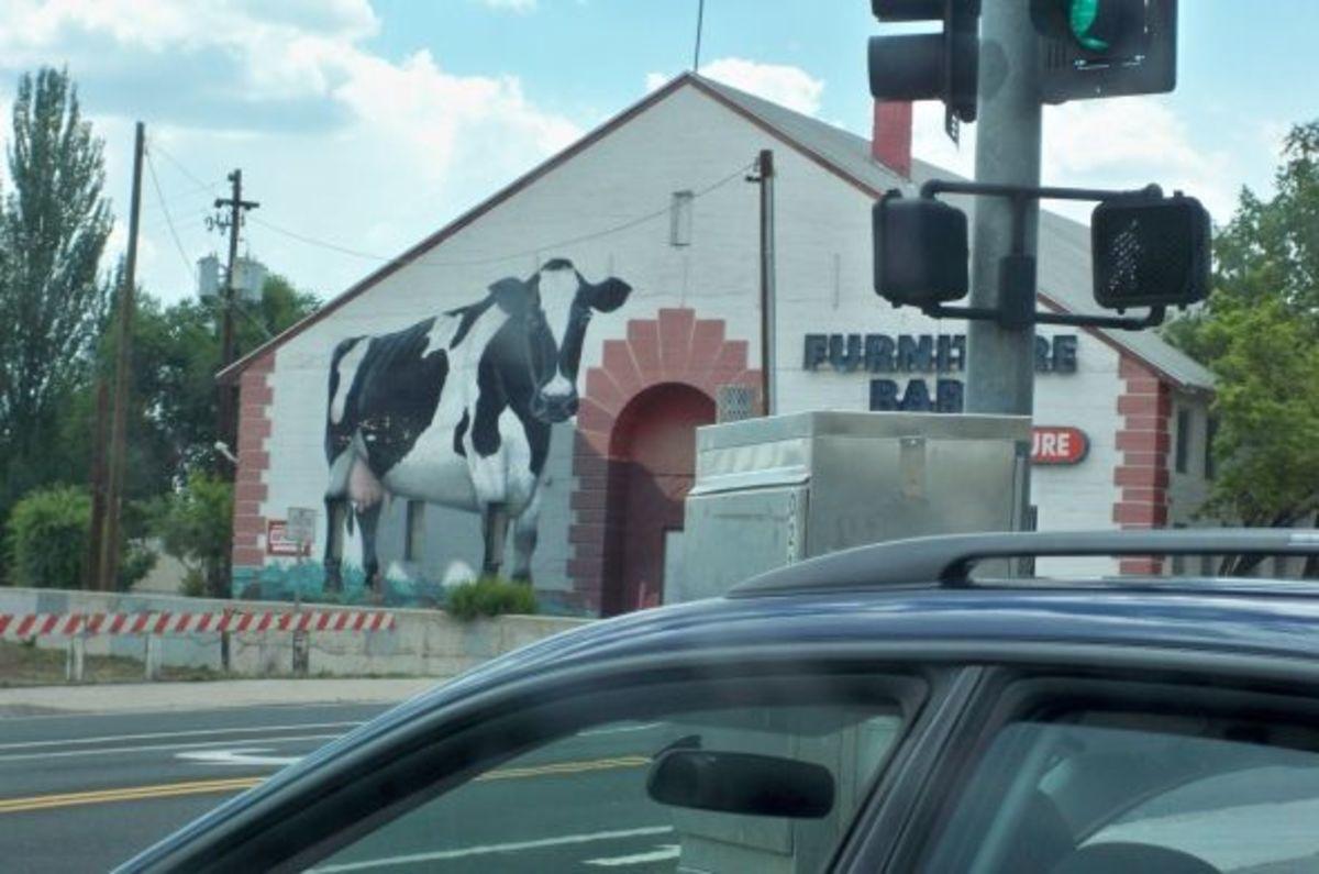 Furniture Barn Cow Mural