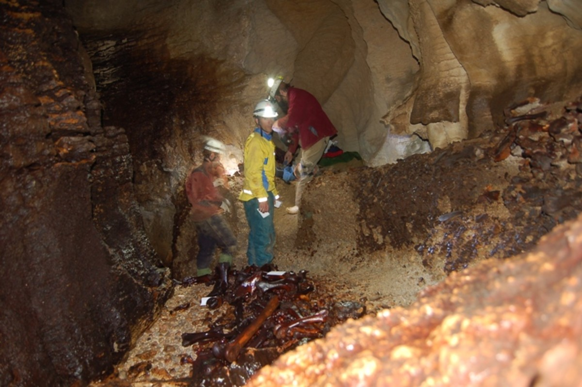 This cave contains a bone deposit all belonging to the moas' which once roamed widely across New Zealand.