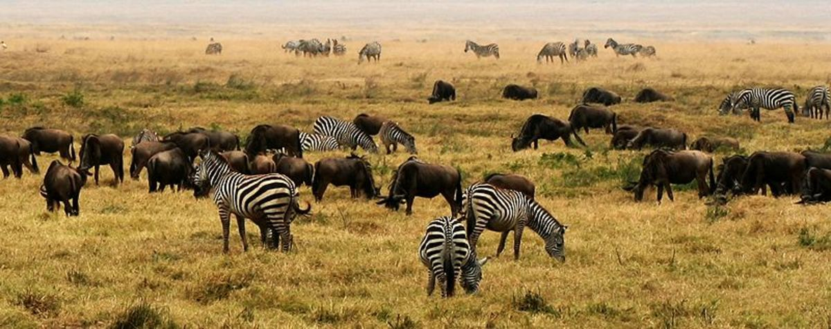Today, East Africa is the last refuge for the megafauna that once inhabited the entire world except Antarctica.