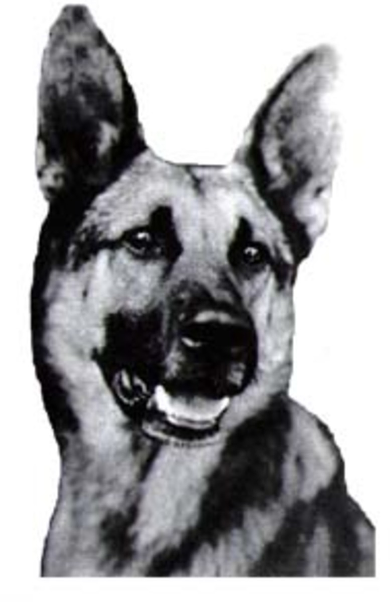 Strongheart did much to make German Shepherds popular after World War 1.