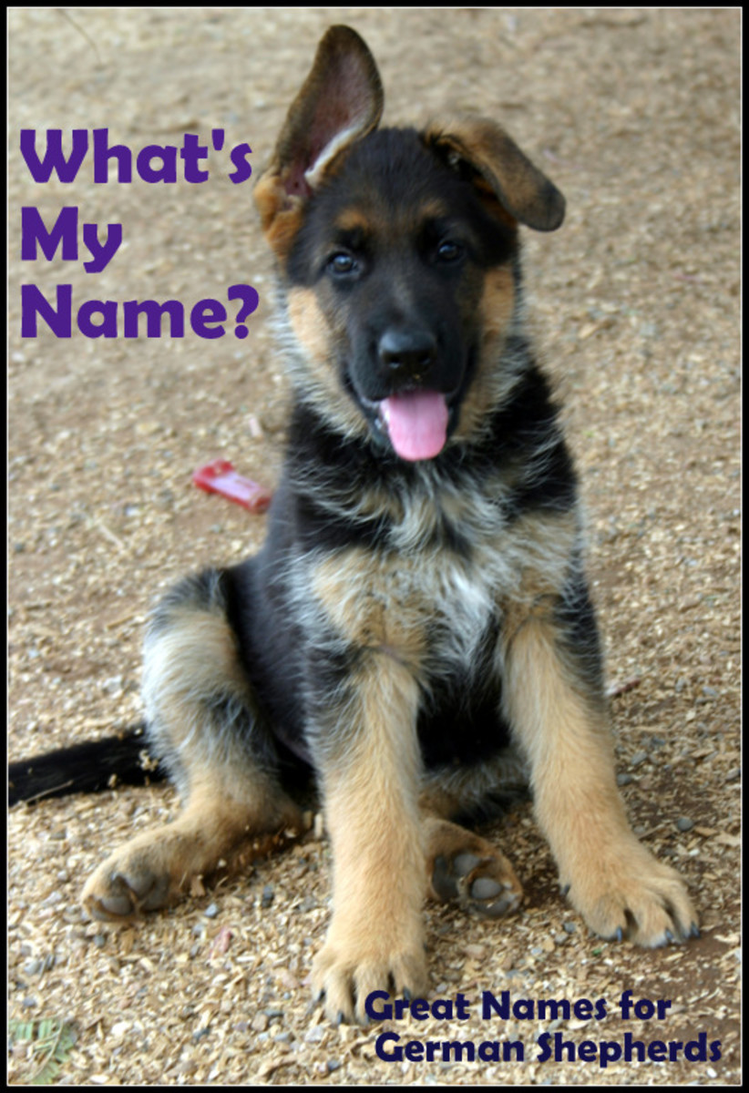Names for German Shepherds