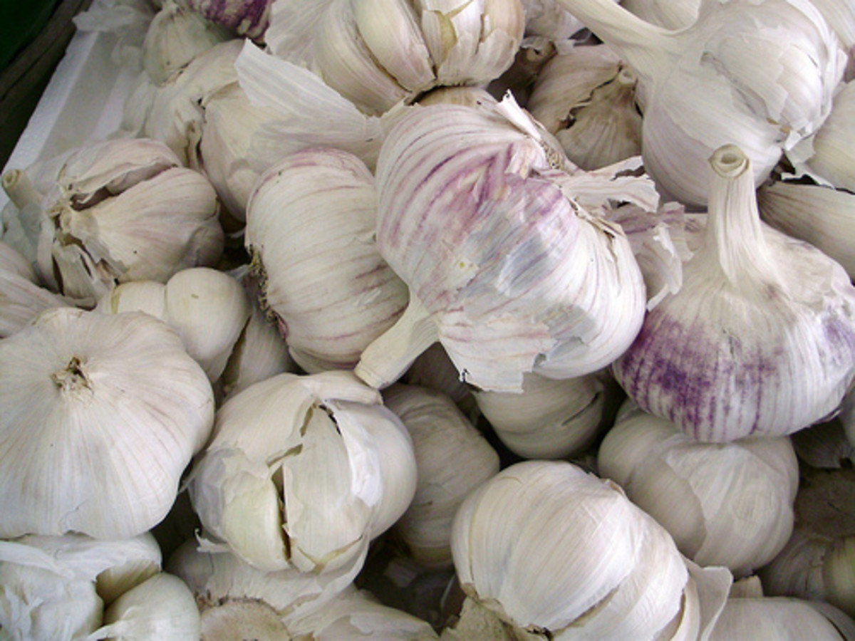 Garlic not only protects against the vampire but the evil eye too.