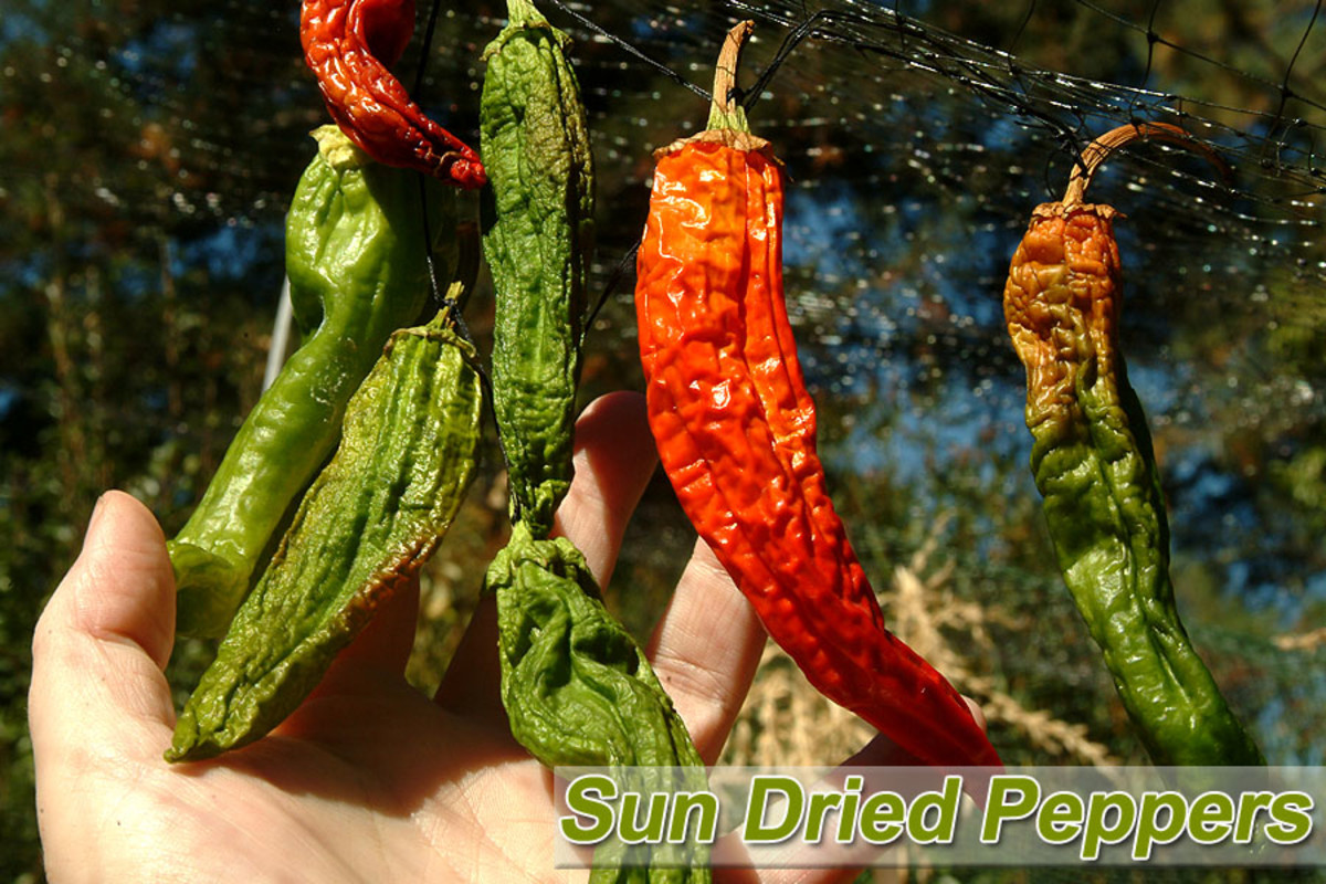 Sun Dried Chili Peppers