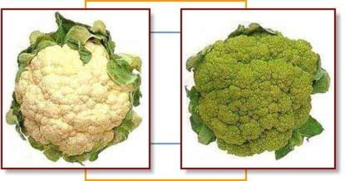 Photo credit Wikipedia Broccoflower
